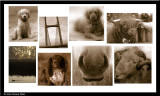 2006 - A Year in Sepia