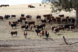 Drought Affected Pasture 2