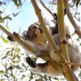 Thursday Challenge: Comfortably(?) Asleep