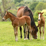 Mare and Two Foals