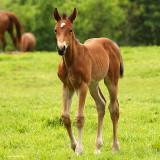 Foal Walking