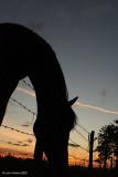 Pony, Fence and Sunset