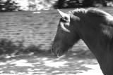 Pony Pan