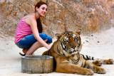 Tiger Temple - 2006