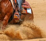 horses gallery