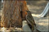 sparrow (2)