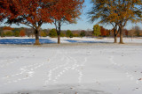 Geese tracks over the #8 fairway.