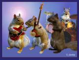 Squirrel Shuffle