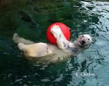 Bubba the Polar Bear