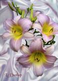 White Satin Lilies