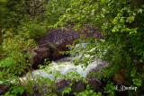 3.2 - Kingsbury Creek And Apple Tree, Spring Green
