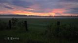 Sunrise And Mist Over Pasture