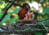 Baby Robins 1st Day