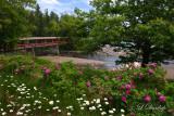 65 - Lutsen Roses & Daisies
