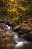 10 - Tischer Creek Narrow Cascade 1, Autumn Leaves