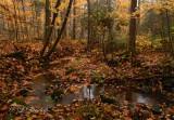 Autumn Woods And Stream In Fog