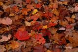 Autumn Forest Floor Color
