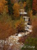 3.3 - Kingsbury Creek, Late Autumn (Vertical)