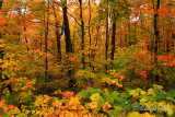 86 - Sawtooth Mountain Ridge: Autumn Woods