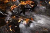 Autumn Leaves In Tischer Creek