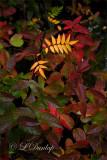 34.1 - Autumn Undergrowth