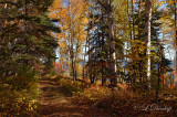 Last Creek Lane, Along Lake Superior