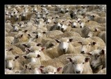 Where in the Flock are you.