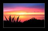 Kiwi Sunrise.
