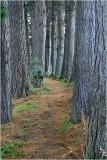 Manaia Woodland.