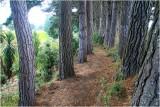 Manaia Woodland Path.