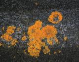 Lichen on Tower Manaia.