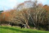 Mahurangi countryside 1.