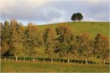 Mahurangi Countryside 7.
