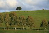 Mahurangi countryside 8.