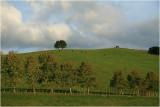 Mahurangi countryside 9.