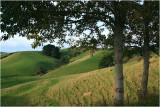 Mahurangi countryside 11.