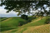 Mahurangi countryside 12.