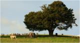 Mahurangi Countryside 14.