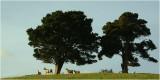 Mahurangi Countryside 15.