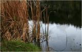 Waterhole grasses.