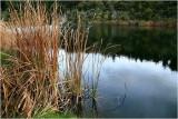 Waterhole grasses. 2