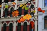 Aucklands Autumn.jpg