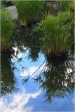 Reflections at Wintergarden.jpg
