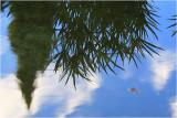 Reflections at Wintergarden 2.jpg