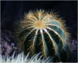 Cactus 4.jpg