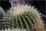 Cactus 6.jpg