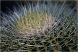 Cactus 7.jpg