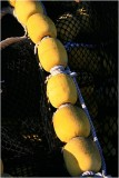 Yellow Bouys 6.jpg