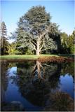 AVON River Botanical Gardens Chch.j