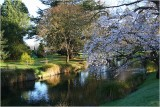 Avon River Botanical Gardens CHCH 2.